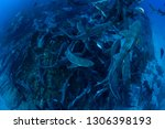 banded hound shark and red... | Shutterstock . vector #1306398193