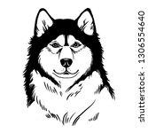 dog  husky  alaskan malamute ... | Shutterstock .eps vector #1306554640
