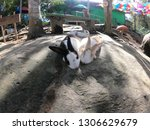 rabbit resting together | Shutterstock . vector #1306629679