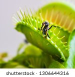 a macro photo of a fly which... | Shutterstock . vector #1306644316