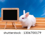 small rabbits newborn have set... | Shutterstock . vector #1306700179