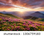 mountains during flowers... | Shutterstock . vector #1306759183