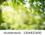 closeup nature view of green... | Shutterstock . vector #1306822600