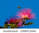 honey bee flying over a red... | Shutterstock . vector #1306911046