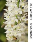orchid flower in garden   Shutterstock . vector #1306925440