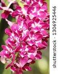 orchid flower in garden   Shutterstock . vector #1306925446