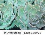 beautiful stone rose flowers    Shutterstock . vector #1306925929
