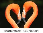 Two Flamingo Heads   Heart...