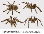 graphical set of tarantula... | Shutterstock .eps vector #1307066023