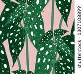 begonia maculata wightii. hand... | Shutterstock .eps vector #1307108899