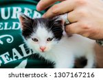 Stock photo  small black and white kitten man hand is hugging a kitten the kitten looks into the camera 1307167216