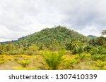not a high hill in the tropics...   Shutterstock . vector #1307410339