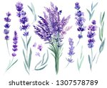 Set Of Lavender Flowers ...