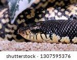 brown venomous snake snout ... | Shutterstock . vector #1307595376