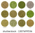 twelve dried common culinary...   Shutterstock . vector #1307699536