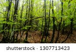 spring forest summer day nature ... | Shutterstock . vector #1307713423