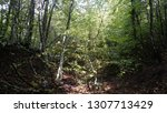 spring forest summer day nature ... | Shutterstock . vector #1307713429
