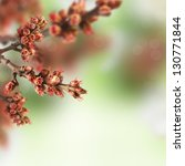 Blooming spring tree background with bokeh. - stock photo
