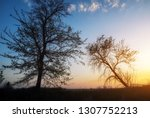 silhouettes of trees against a...   Shutterstock . vector #1307752213