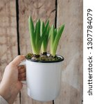 hand holding hyacinth in a...   Shutterstock . vector #1307784079