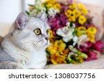 fluffy cats sit next to a lush... | Shutterstock . vector #1308037756