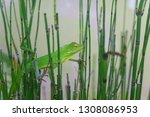 bamboo water plants with cool... | Shutterstock . vector #1308086953