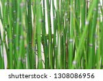 bamboo water plants with cool... | Shutterstock . vector #1308086956