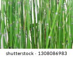 bamboo water plants with cool... | Shutterstock . vector #1308086983