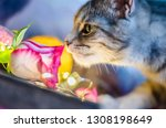 Stock photo the kitten is smelling a pink rose against the background of lights of garlands valentine day 1308198649