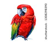 Watercolor Red Macaw Isolated...