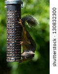 Squirrel And Bird Feeder Close...