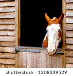horse with no mane | Shutterstock . vector #1308339529