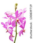 orchid | Shutterstock . vector #130839719