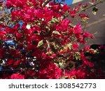 phlox subulata flowers... | Shutterstock . vector #1308542773
