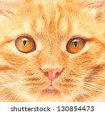 Ginger Cat Background