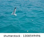 a seagull  soaring in the blue...   Shutterstock . vector #1308549496
