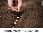 sow   Shutterstock . vector #130864808