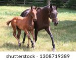 mare and foal | Shutterstock . vector #1308719389