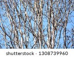 autumn deciduous trees with... | Shutterstock . vector #1308739960