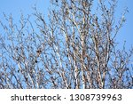 autumn deciduous trees with... | Shutterstock . vector #1308739963