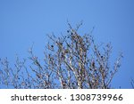 autumn deciduous trees with... | Shutterstock . vector #1308739966