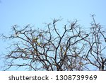autumn deciduous trees with... | Shutterstock . vector #1308739969