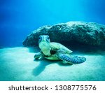 """""""kissy face"""" this green sea...   Shutterstock . vector #1308775576"""
