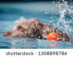 brown shaggy dog playing in... | Shutterstock . vector #1308898786