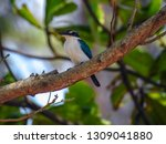 the birds  collared kingfisher  ... | Shutterstock . vector #1309041880