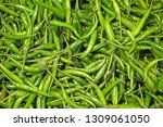 abstract of fresh raw green...   Shutterstock . vector #1309061050
