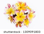 nature pattern of blossoming... | Shutterstock . vector #1309091803