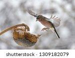 the finch in flight under... | Shutterstock . vector #1309182079