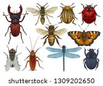 insect illustration  drawing ... | Shutterstock .eps vector #1309202650