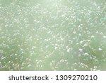 beautiful blurred grass flowers ... | Shutterstock . vector #1309270210